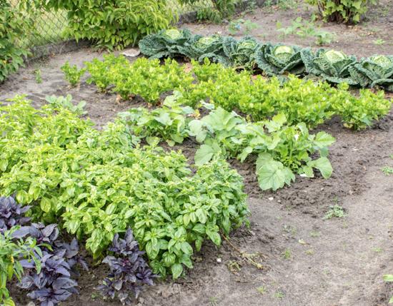 agricultira_organica