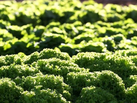 agricultura_sustentavel