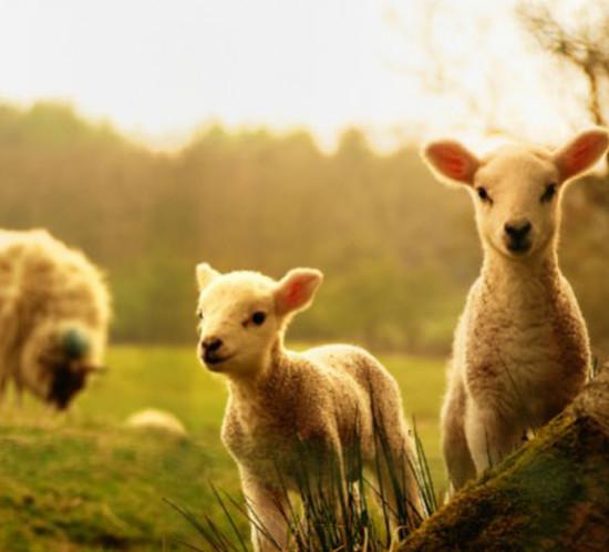 animais_nova_zelandia