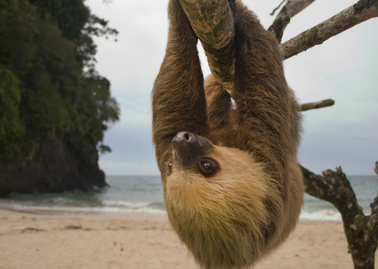 zoo_costarica
