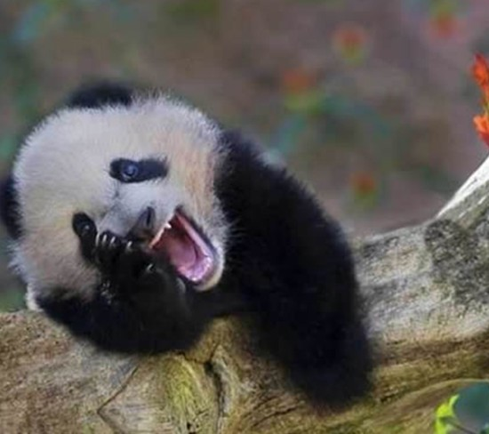 animais-sorrindo-1