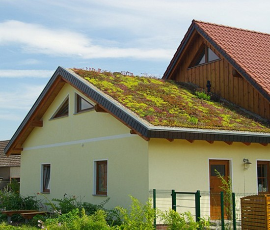 green roof 02