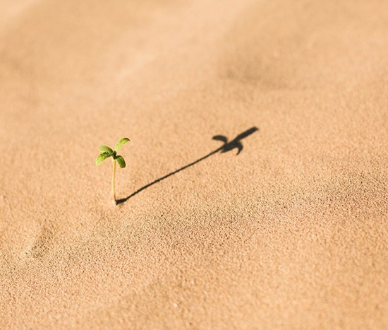 fazenda_deserto
