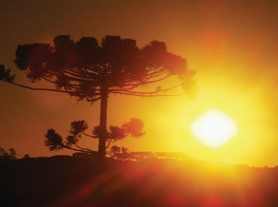 sol_parana