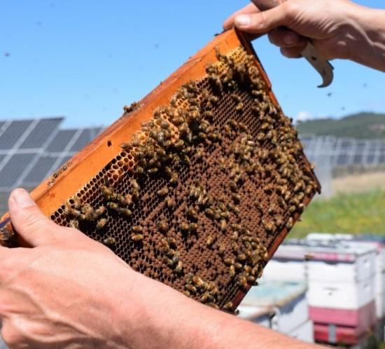 apiario-energia-solar-abelhas-detalhe-1024x683
