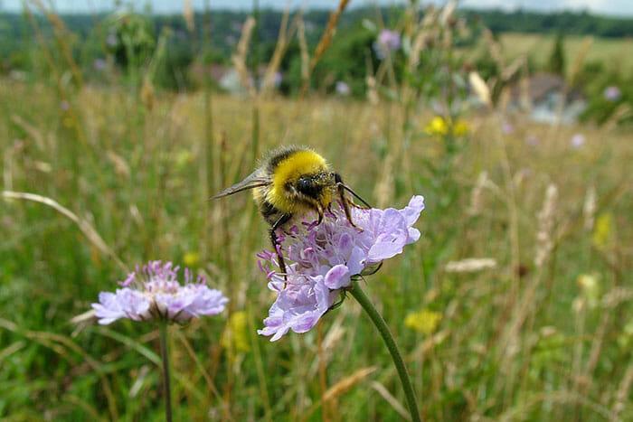 abelhas1