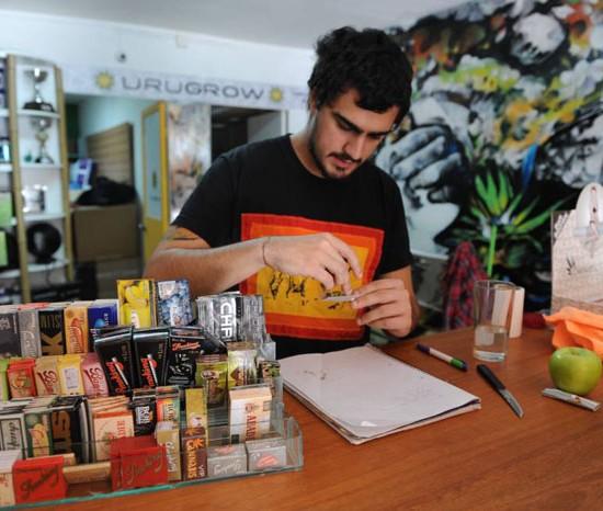 cannabis_uruguai