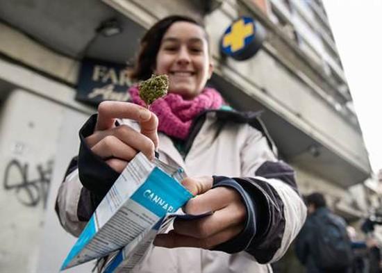 uruguai_cannabis