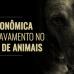 Crise econômica leva ao agravamento no abandono de animais