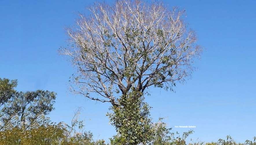 Dia Nacional do Cerrado: o que comemorar?
