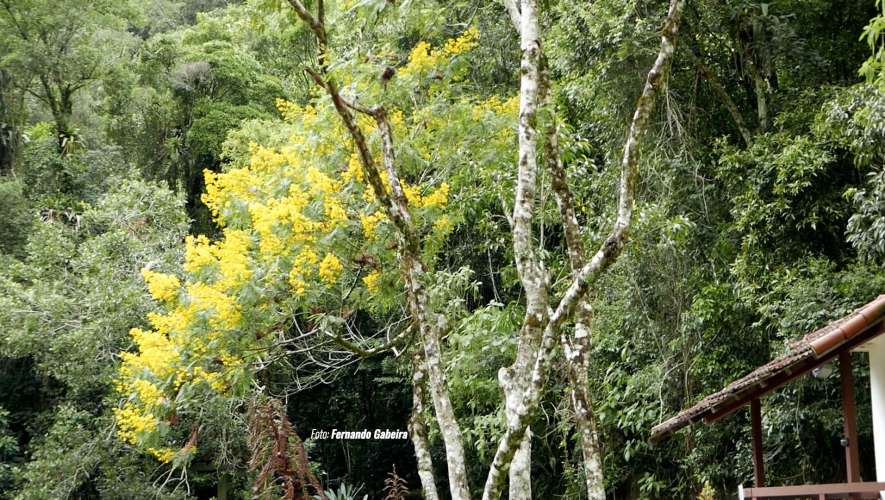 Dia da Árvore – 7 hábitos que ajudam a conservar a natureza