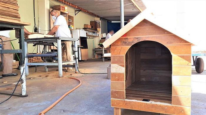 Entulho é transformado em casinhas para cães abandonados
