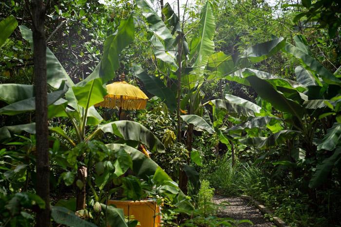 Embrapa abre capacitação gratuita em sistemas agroflorestais