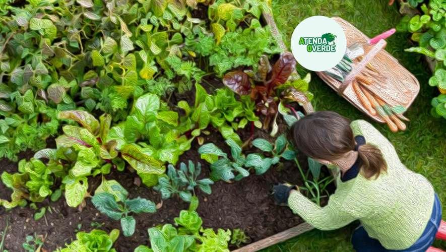 Que tal aprender a cultivar hortaliças em pequenos espaços?