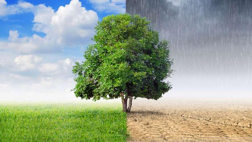 Mudança climática: faça a sua parte