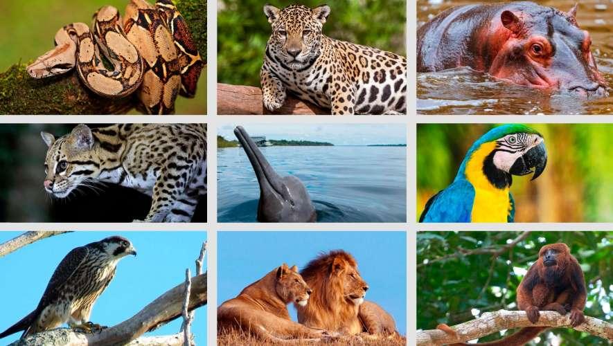 No Dia Mundial da Vida Selvagem, um grito pela vida e contra o tráfico