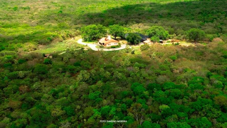 Caatinga, um bioma resiliente e cheio de vida