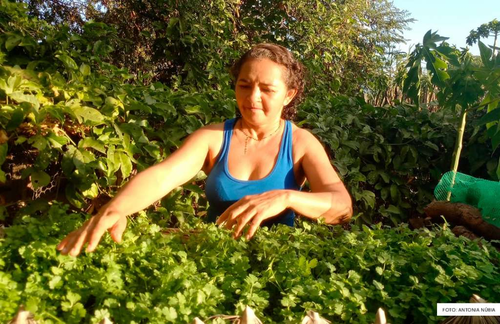 Dona Núbia aprendeu a reaproveitar a água para regar as plantas do seu quintal. Foto: Kelly Cristina